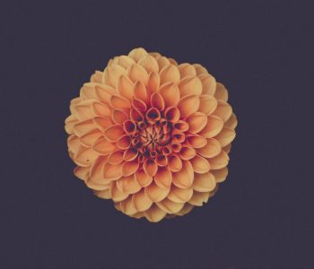flower, pattern, mindfulness. meditation., Stephen Rodgers Counseling of Denver, Denver therapist for men, men's therapy in Denver